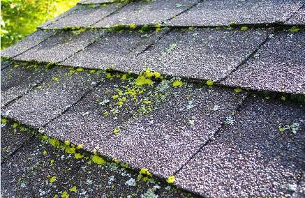 Below Is An Example Of A Moss And Algae Problem Let Go Too Long. This Roof  Will Need Complete Replacement